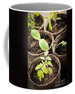 Seedlings Growing In Peat Moss Pots Coffee Mug