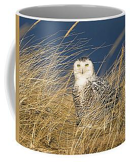 Snowy Owl In The Dunes Coffee Mug