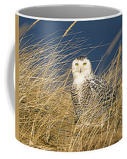 Snowy Owl In The Dunes Coffee Mug by John Vose