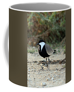 Spur-winged Plover And Chick Coffee Mug