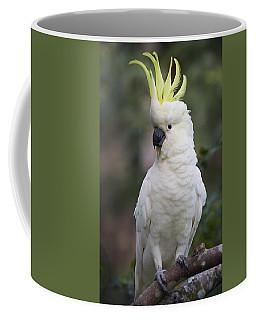 Sulphur-crested Cockatoo Displaying Coffee Mug
