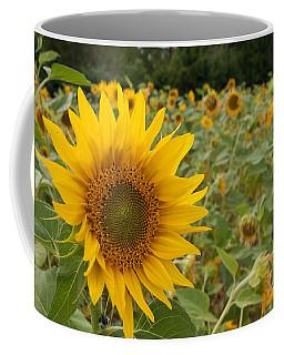 Sun Flower Fields Coffee Mug