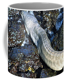White Moray Eel Coffee Mug