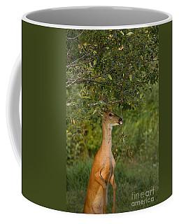 White-tailed Buck In Velvet Coffee Mug