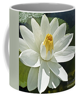 White Water Lily - Nymphaea Coffee Mug