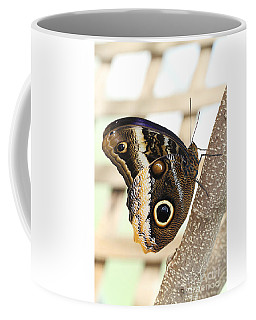 Yellow-edged Giant Owl Butterfly #4 Coffee Mug by Judy Whitton