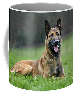 101130p018 Coffee Mug by Arterra Picture Library