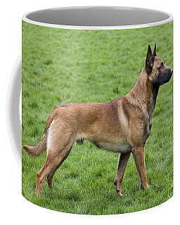 101130p020 Coffee Mug by Arterra Picture Library