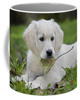 101130p064 Coffee Mug by Arterra Picture Library