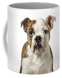 110307p153 Coffee Mug by Arterra Picture Library