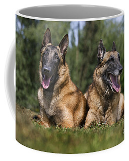 110506p116 Coffee Mug by Arterra Picture Library