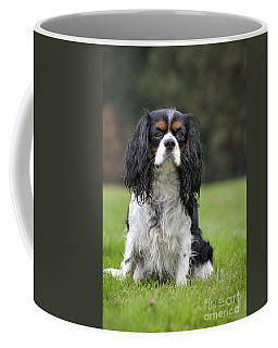 111216p255 Coffee Mug by Arterra Picture Library