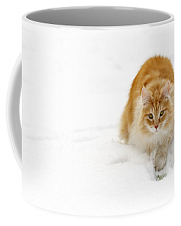 111230p310 Coffee Mug by Arterra Picture Library