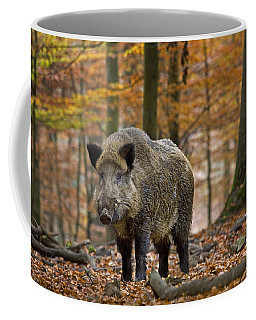 Coffee Mug featuring the photograph 121213p283 by Arterra Picture Library