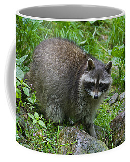 Coffee Mug featuring the photograph 130201p045 by Arterra Picture Library