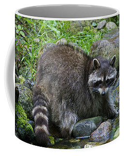 Coffee Mug featuring the photograph 130201p047 by Arterra Picture Library