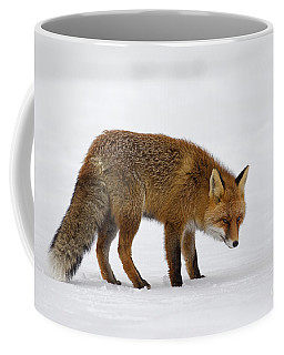 Coffee Mug featuring the photograph 130201p051 by Arterra Picture Library
