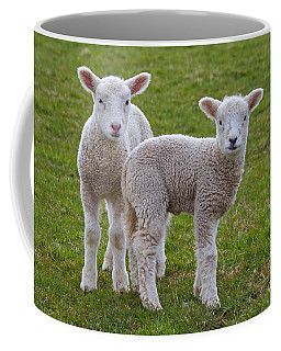 Coffee Mug featuring the photograph 130201p091 by Arterra Picture Library