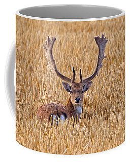 Coffee Mug featuring the photograph 130201p293 by Arterra Picture Library