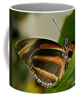 Coffee Mug featuring the photograph Butterfly by Olga Hamilton