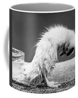 1950s Duckling Standing In An Awkward Coffee Mug