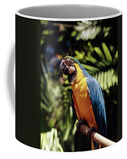1960s Blue And Yellow Macaw Parrot Coffee Mug