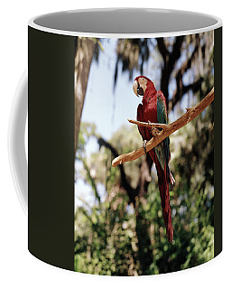 1960s Scarlet Macaw Parrot Perched Coffee Mug