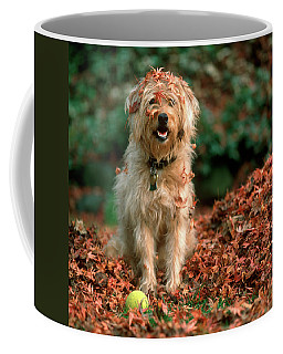 1980s Shaggy Beige And White Dog Coffee Mug