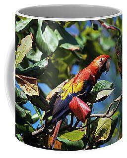 1990s Scarlet Macaw Ara Macao In Almond Coffee Mug