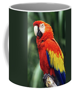 1990s Scarlet Macaw Ara Macao Looking Coffee Mug