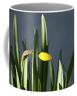 Coffee Mug featuring the photograph 1st Daff by Joe Schofield