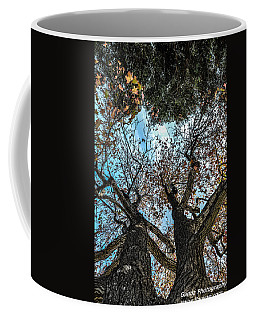 1st Tree Coffee Mug