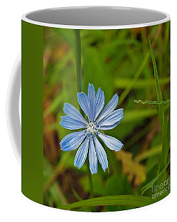Blue Chicory Flower  Coffee Mug