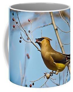 Cedar Waxwing With Berry Coffee Mug