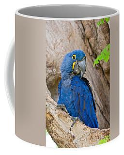 Close-up Of A Hyacinth Macaw Coffee Mug