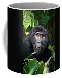 Close-up Of A Mountain Gorilla Gorilla Coffee Mug