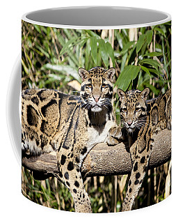 Coffee Mug featuring the photograph Clouded Leopards by Brian Jannsen