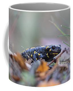 Fire Salamander - Salamandra Salamandra Coffee Mug