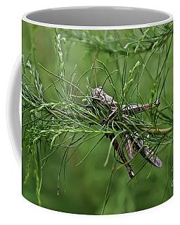 Coffee Mug featuring the photograph Grasshopper by Olga Hamilton