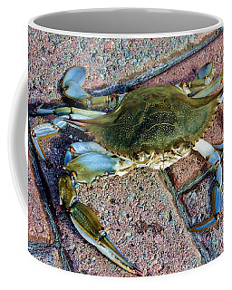 Coffee Mug featuring the photograph Hudson River Crab by Lilliana Mendez