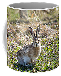 Coffee Mug featuring the photograph Jackrabbit by Michael Chatt