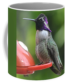 Coffee Mug featuring the photograph Male Costa On Perch by Jay Milo