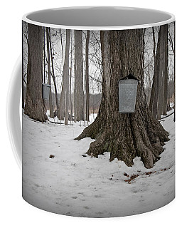 Maple Sugaring Coffee Mug by John Stephens