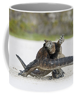 Marine Iguana Males Fighting Turtle Bay Coffee Mug