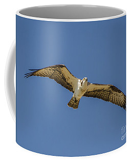 Coffee Mug featuring the photograph Osprey In Flight Spreading His Wings by Dale Powell