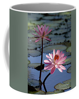 Pink Water Lily In The Spotlight Coffee Mug