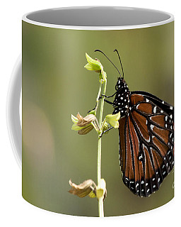 Coffee Mug featuring the photograph Queen Butterfly by Meg Rousher