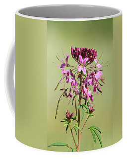 Rocky Mountain Bee Plant Coffee Mug