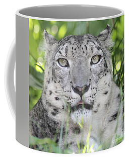 Snow Leopard Coffee Mug by John Telfer