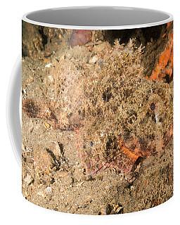 Tasseled Scorpionfish Coffee Mug